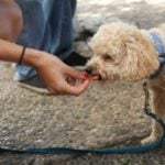 How to make real meat dog treats with 7 steps