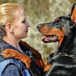How to stop a Doberman from barking? (5 easy steps)