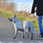 [9 reasons] why your dog stops walking & won't move?