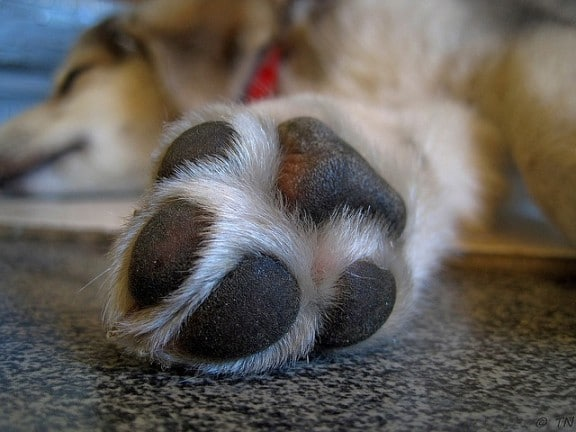 Do all dogs have webbed feet