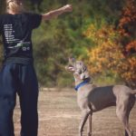 Are Weimaraners good family dogs? [In-depth guide]