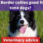 Are Border collies good first time dogs? [Vet advise]