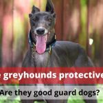 Are greyhounds protective? (Are they good guard dogs?)
