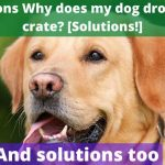 11 Reasons Why does my dog drool in the crate [Solutions!]