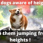 Are dogs aware of heights? (Stop them jumping from heights)