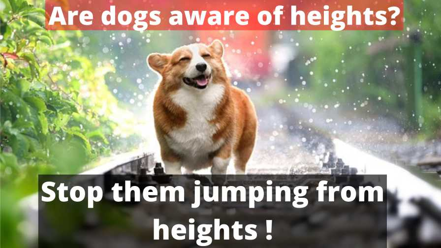are dogs aware of heights