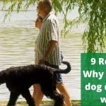 9 Reasons Why does my dog drool on walks. [Solutions too!]