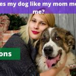 [9 reasons] Why does my dog like my mom more than me?