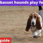Can basset hounds play fetch? [Owners guide]