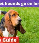 Can basset hounds go on long walks? [Owners Guide!]