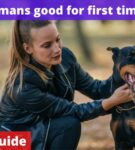 Are Dobermans good for first time owners? [Owners Guide]