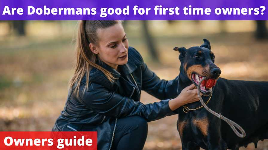 Are Dobermans good for first time owners