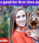 Are yorkies good for first time dog owners? [Owners Guide]