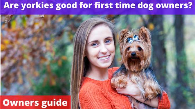Are yorkies good for first time dog owners