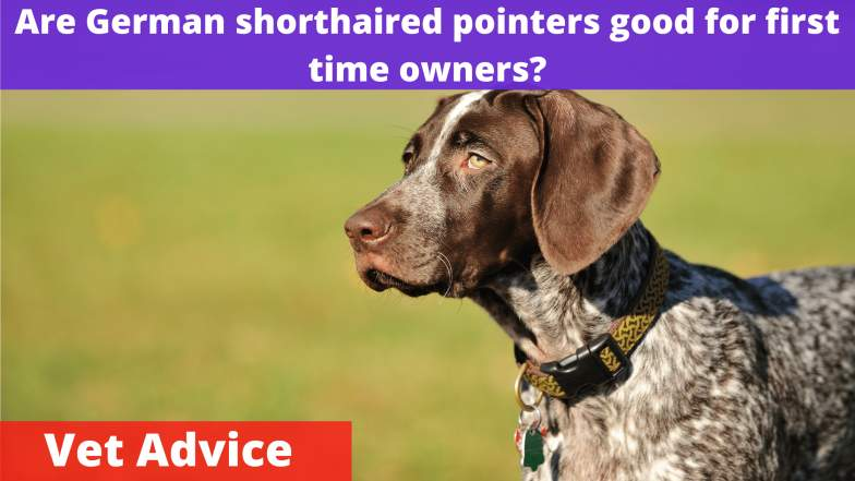 Are German shorthaired pointers good for first time owners