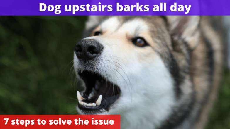 Dog upstairs barks all day