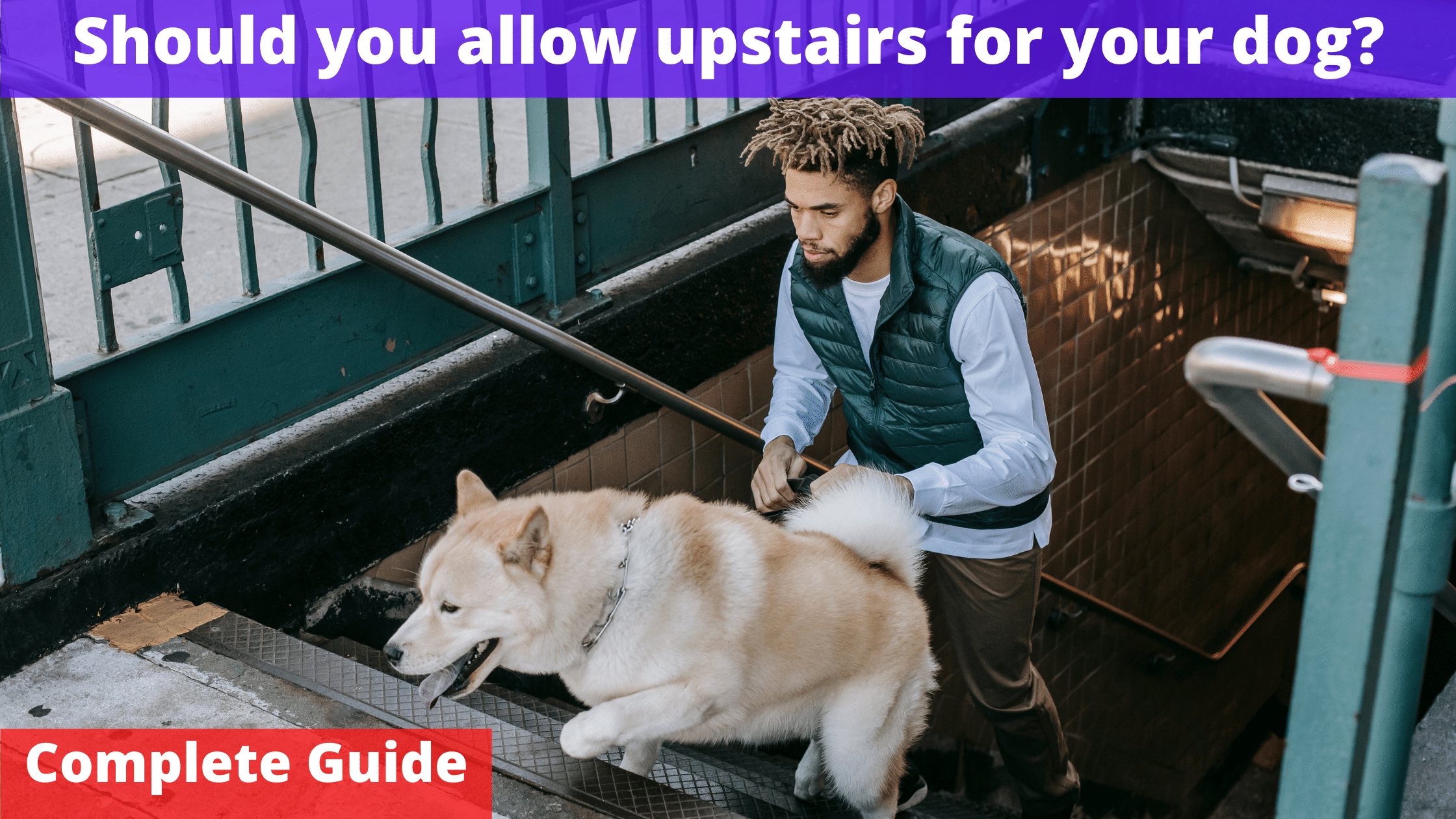 Should you allow upstairs for dogs