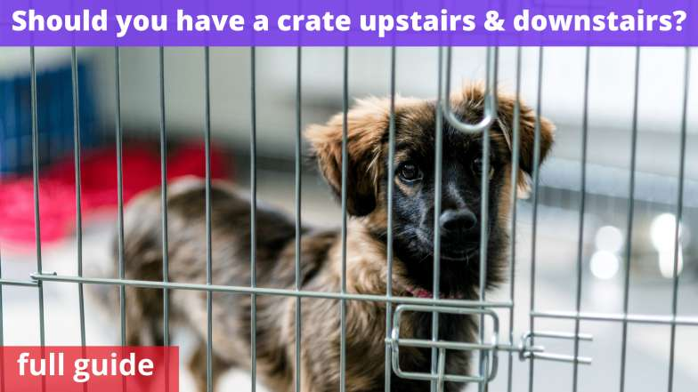 Should you have a crate upstairs & downstairs
