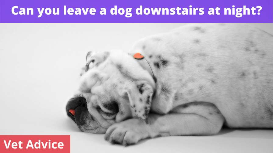 Can you leave a dog downstairs at night