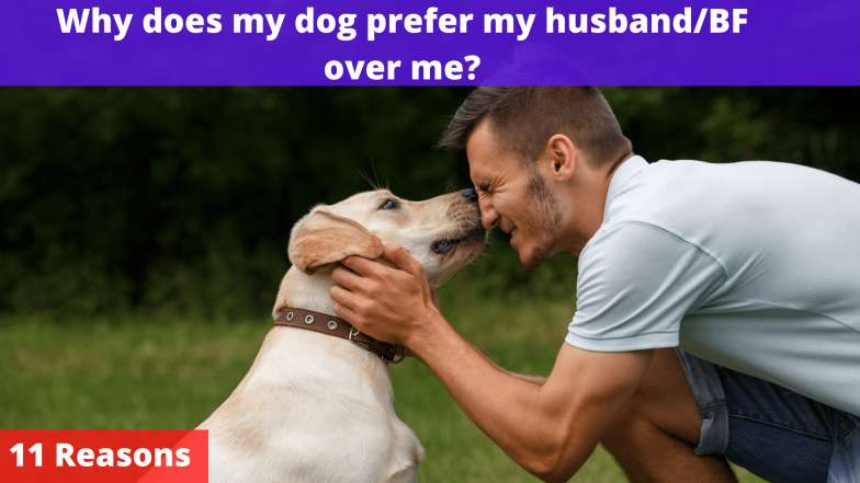 Why does my dog prefer my husband/BF over me