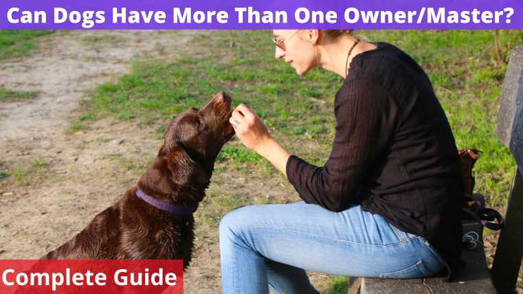Can Dogs Have More Than One Owner