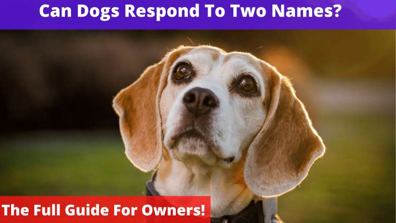 Can Dogs Respond To Two Names