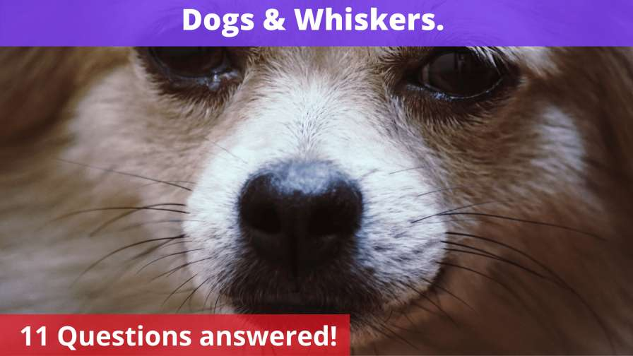 Dogs & Whiskers.
