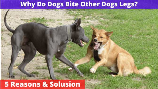 Why Do Dogs Bite Other Dogs Legs