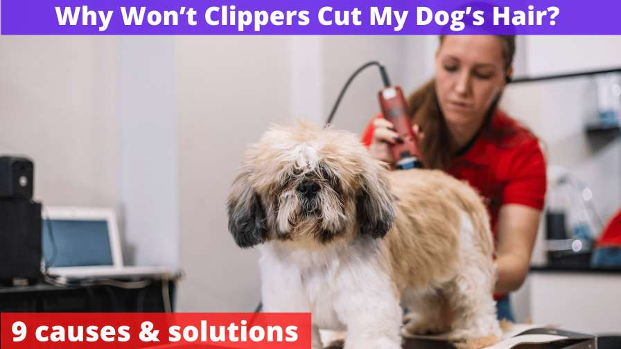 Why Won't Clippers Cut My Dog's Hair